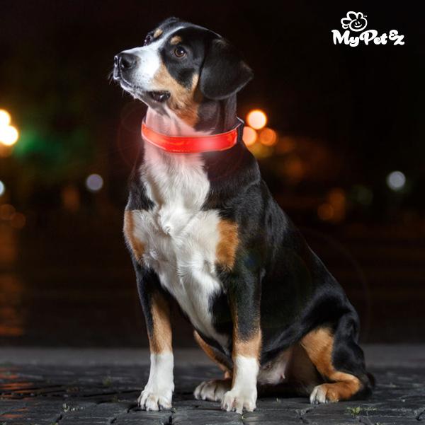 My Pet EZ LED Nyakörv Kutyáknak
