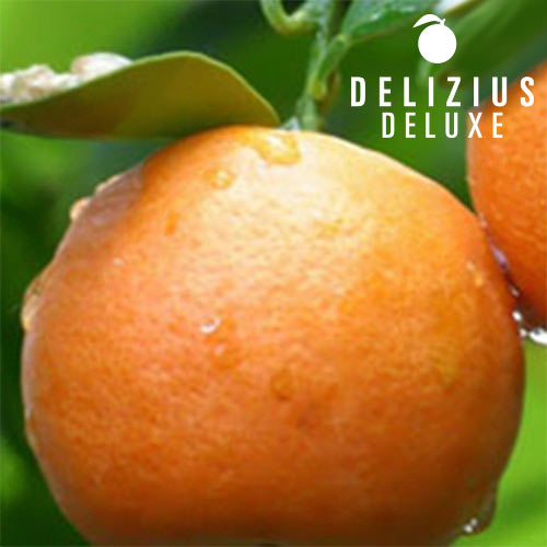 Deluxe Valencian<br> Navelina Oranges<br>10 kg